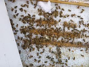 dead out beekeeping honey bees