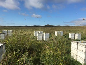 bee hives in field